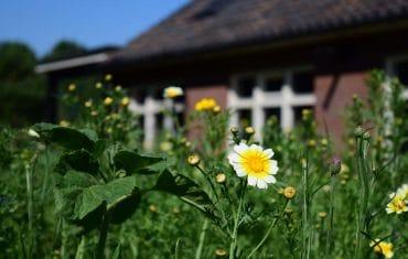 Tuin met bloemen - De Maasgaarde