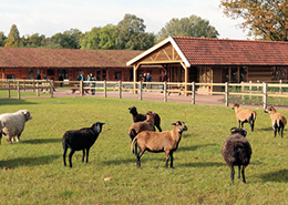 Kinderboerderij De Elzenhoek in Oss