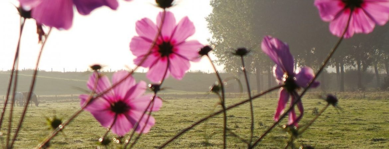 Natuur in Megen | De Maasgaarde