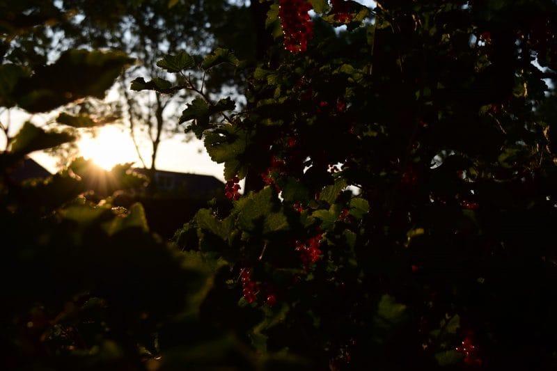 Zonsondergang | De Maasgaarde