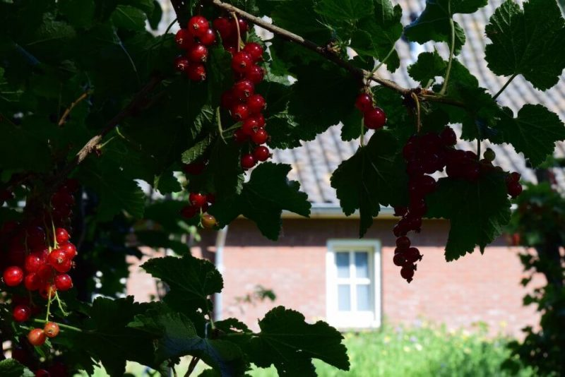 Besjes in de tuin - De Maasgaarde