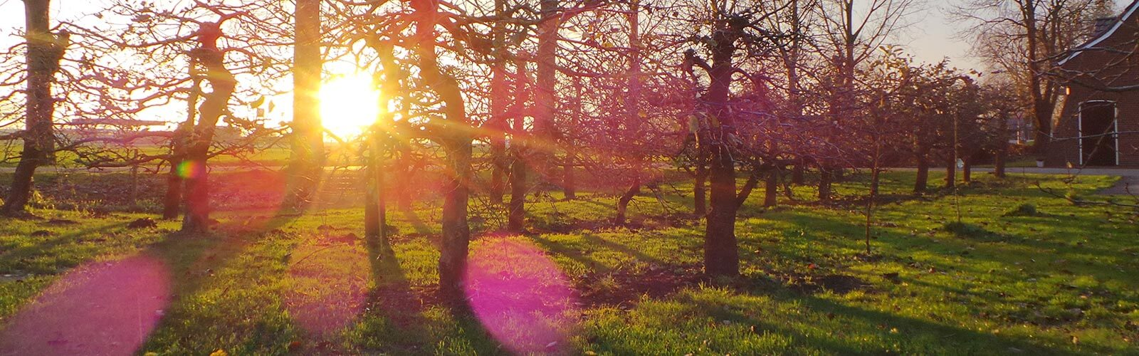 Mooie zonsopgang | De Maasgaarde